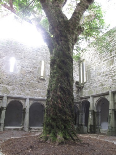 Cloister, Muckross Abbey, Co. Kerry